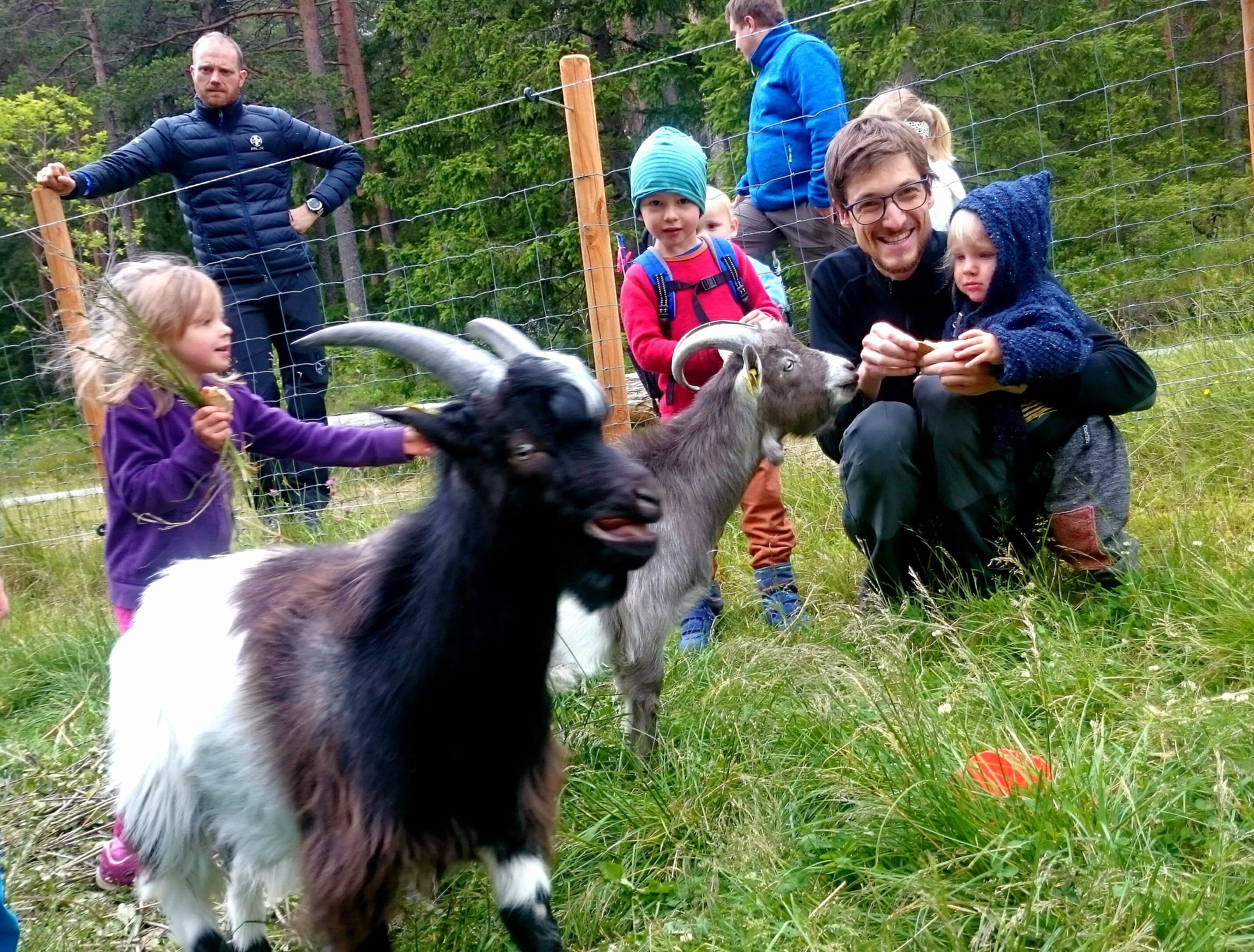 5 Goats II