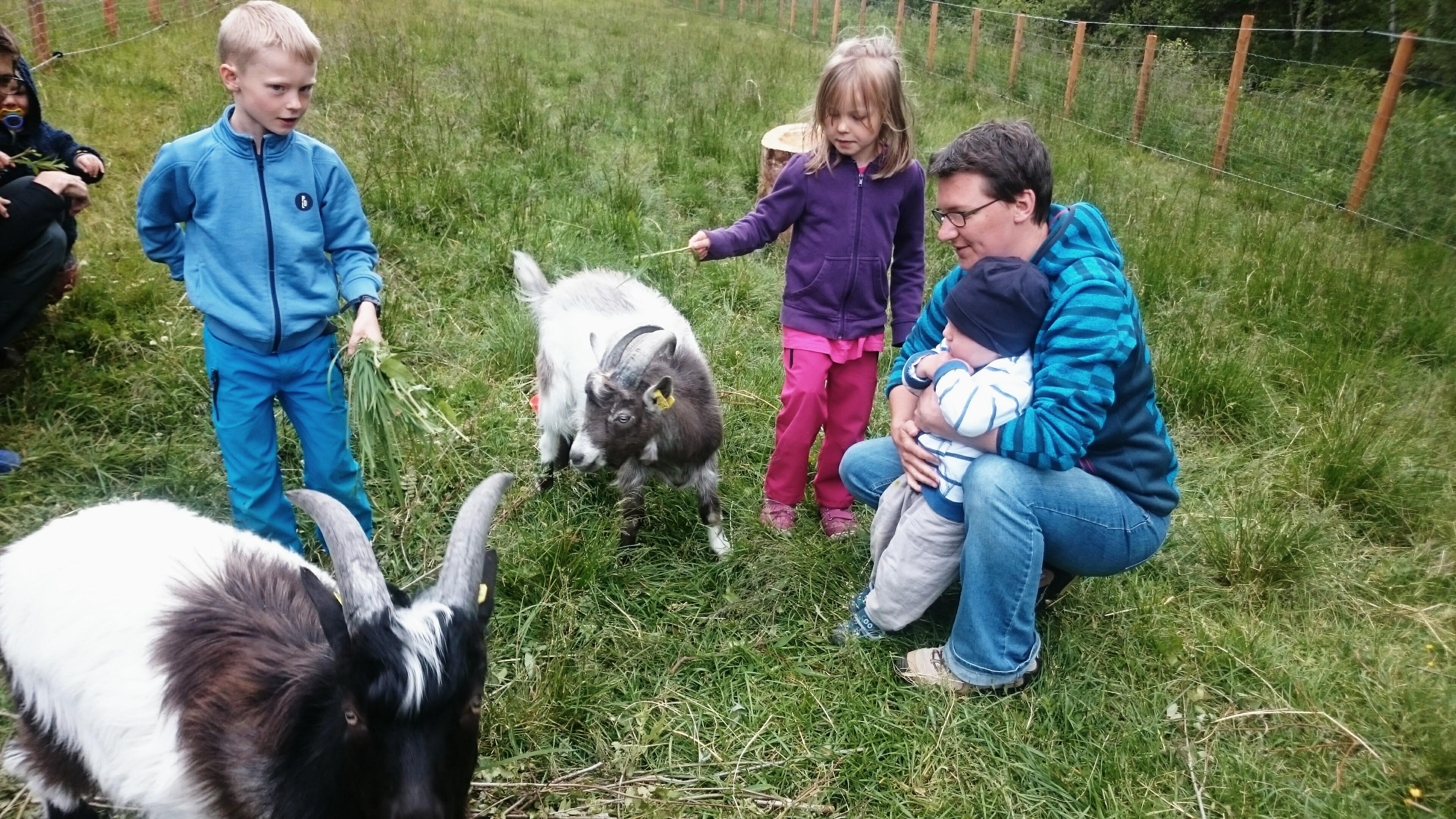5 Goats IV